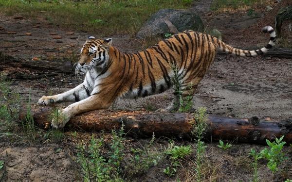 Москвичам разрешат держать дома диких животных