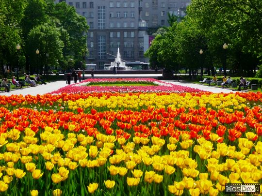 Неменее 10 млн цветов высадят наклумбах столицы