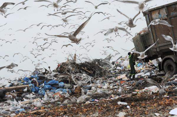 Подмосковье вошло вТоп-10 регионов Российской Федерации снаихудшей экологической ситуацией