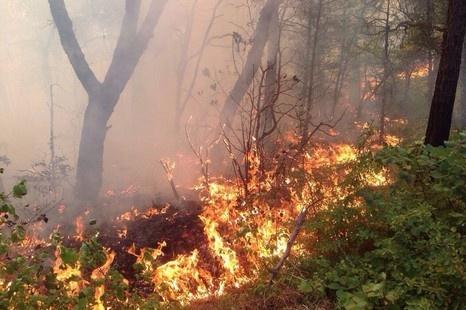 На далеком Востоке потушили большинство лесных пожаров