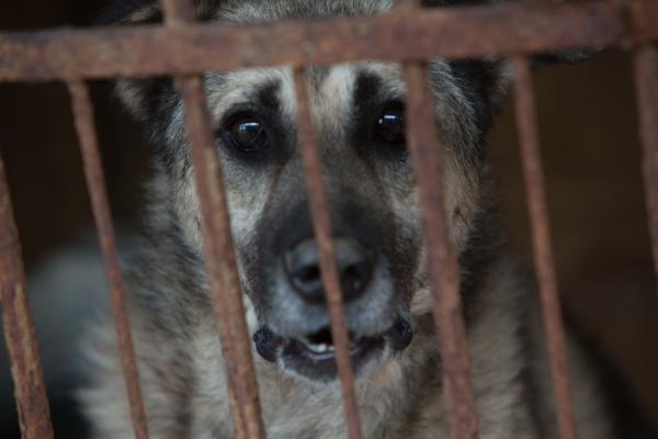 Госдума рассмотрит законопроект о наказании за жестокое обращение с животными