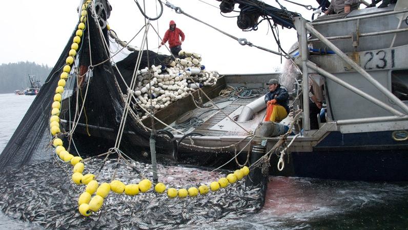 работа на рыболовном судне украина