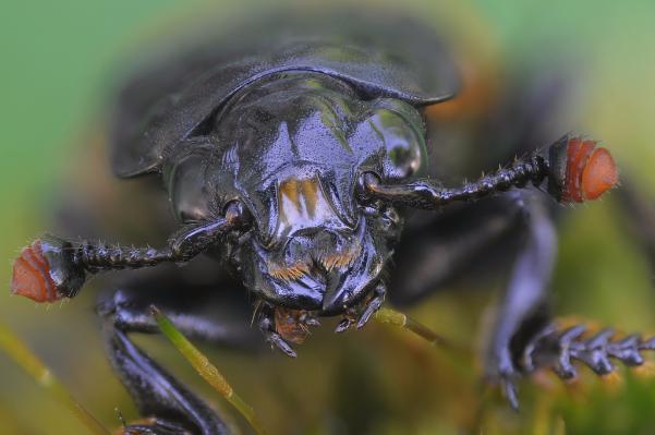 Английские ученые призвали есть насекомых