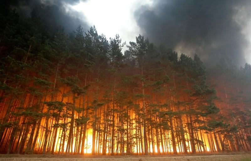 Число погибших  пожаров вКалифорнии выросло до  26